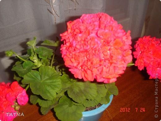 цветочный балкон фото 4