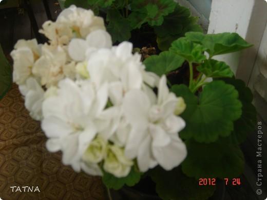 цветочный балкон фото 6