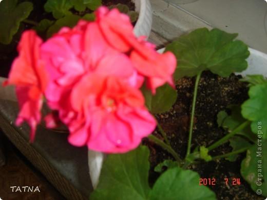 цветочный балкон фото 5