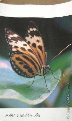 Бабочка, выполненная стеклом фото 2