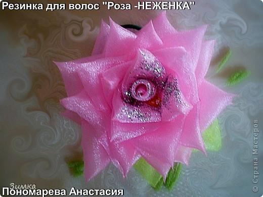 """Ещё розы """"НЕЖЕНКИ"""" фото 1"""