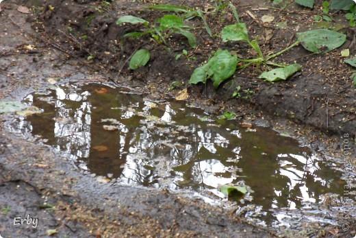 Есть у нас в лесу старый заросший пруд, раньше был он красивым, плавали по нему многочисленные дикие утки, но со временем он захирел, порос ряской, и только в одном уголке его растут кувшинки, нежные, сказочные. Так и кажется, что вот-вот выглянут из-за хрупких атласных лепестков маленькие чудесные эльфы... фото 20