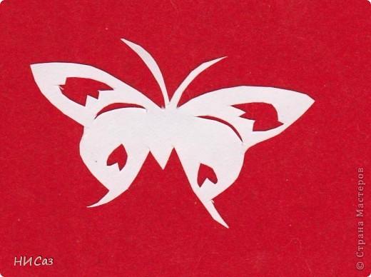 Бабочки фото 12