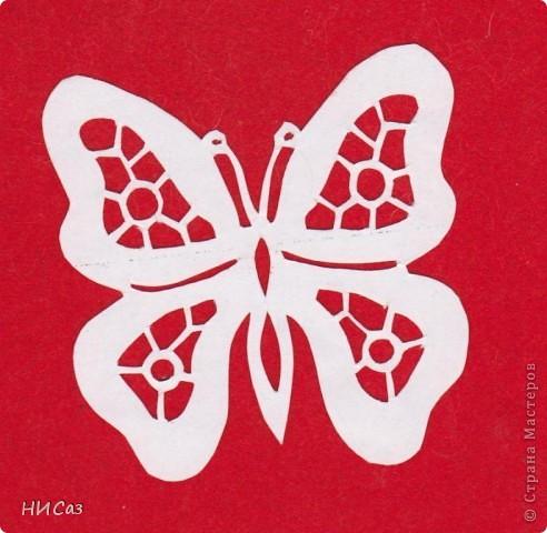 Бабочки фото 10