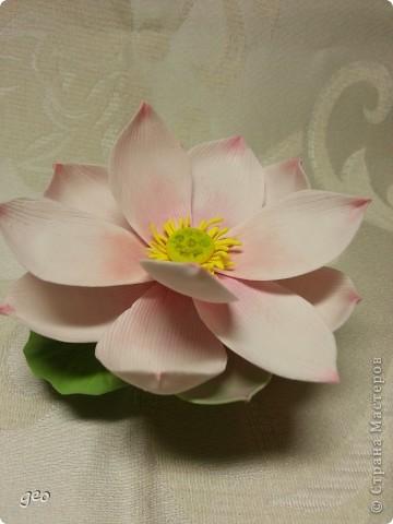 Мечты сбываются!!!!!! Лотос, это цветок богов!!!!  фото 2