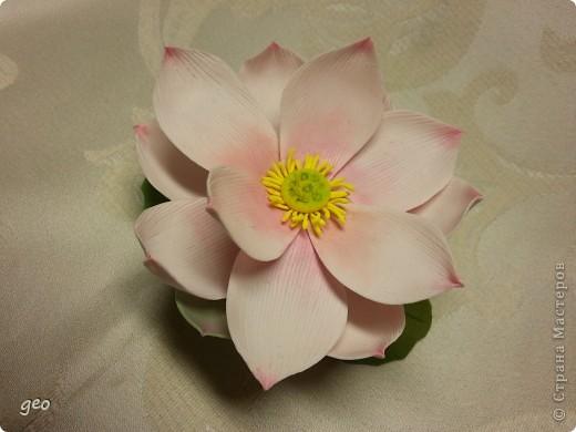 Мечты сбываются!!!!!! Лотос, это цветок богов!!!!  фото 5