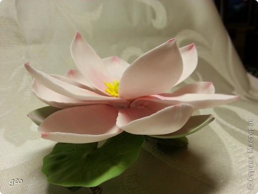 Мечты сбываются!!!!!! Лотос, это цветок богов!!!!  фото 3