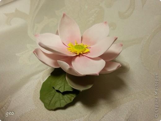 Мечты сбываются!!!!!! Лотос, это цветок богов!!!!  фото 4