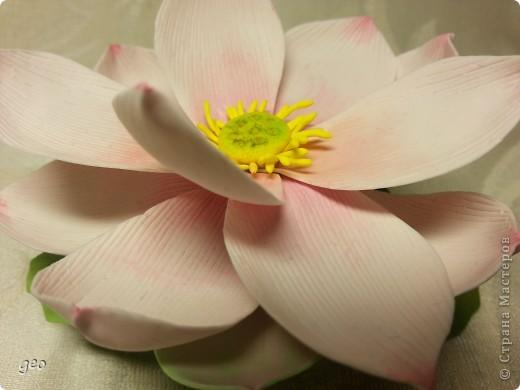 Мечты сбываются!!!!!! Лотос, это цветок богов!!!!  фото 8