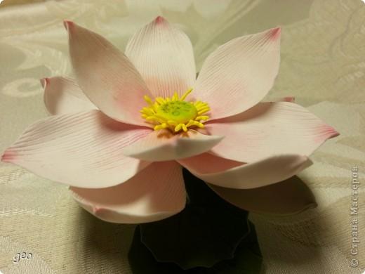 Мечты сбываются!!!!!! Лотос, это цветок богов!!!!  фото 1