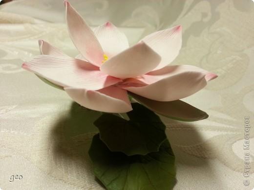 Мечты сбываются!!!!!! Лотос, это цветок богов!!!!  фото 6