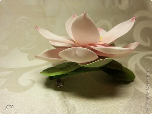 Мечты сбываются!!!!!! Лотос, это цветок богов!!!!  фото 11