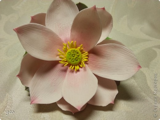 Мечты сбываются!!!!!! Лотос, это цветок богов!!!!  фото 12