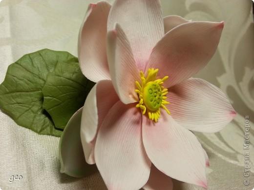 Мечты сбываются!!!!!! Лотос, это цветок богов!!!!  фото 7