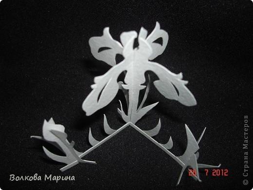 Вот такие цветочки у меня выросли из бумаги. фото 17