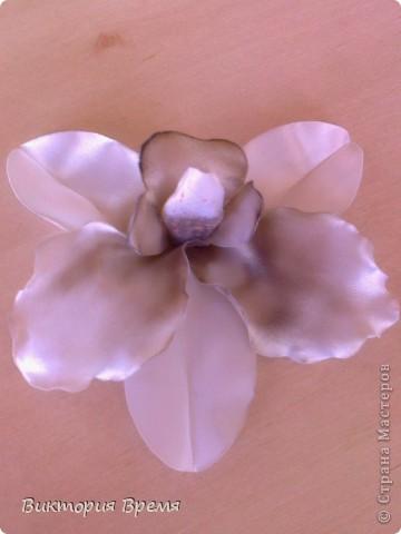 моя первая и наверное не очень удачная орхидея