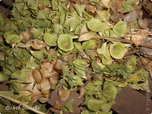 Сделала на кухню небольшое панно вот в таком красно черном цвете.Рамочка и часть кисти цветов белая. Для композиции использовала цветы малюцеллы- прекрасныей материал для творчества. На сухую, крашеную ветку приклеила цветочки-колокольчики малюцеллы. Кто с этим растением не знаком, несколько слов об этом растении. Сухоцвет. Высота растения 40--50см. Весь усыпан маленькими колокольчиками. Не зря его в народе называют ирландские колокола. Цвет колокольчиков зелёный, а когда высыхает становится желтым. Долго хранится.Из него получаются прекрасные скелетированые колокольчики.Один недостаток у растения, неприятный запах. Но для дела всё стерпишь и в сухом виде запах не такой резкий. Растение неприхотливое. Несколько лет назад купила на рынке кустик, теперь весь сад в них. фото 3