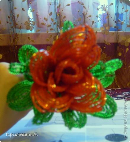 моя первая роза.  фото 1