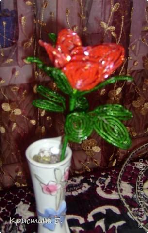 моя первая роза.  фото 2