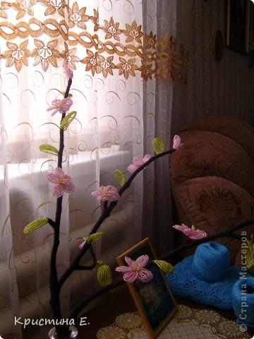 ветка сакуры фото 2