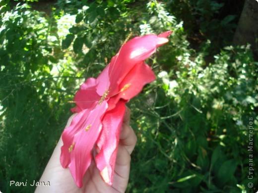 Лилии фото 7