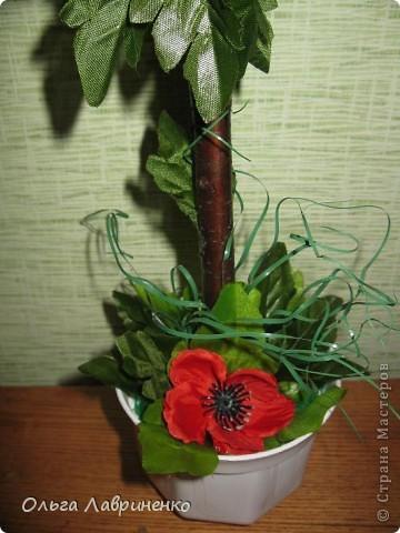 Маковое дерево. Высота - 36 см, крона -16 см. фото 2