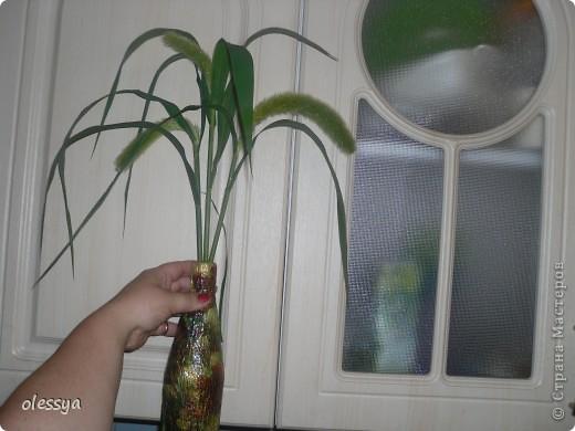 Посеяла вот такой сухоцвет. фото 1