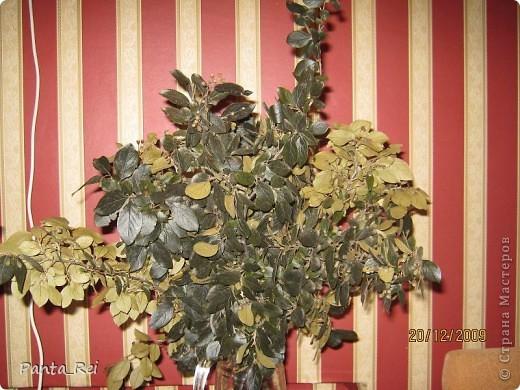 Этот кустарник растёт в огромном кол-ве возле нашего дома...Не знаю что это за кустарник,только листья у него не крупные,и это хорошо В таком состояниии ветки этого кустарника стоят у меня уже два года... фото 2