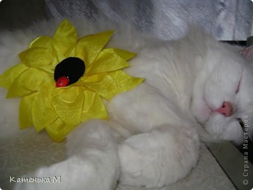 Солнечный цветок. фото 2