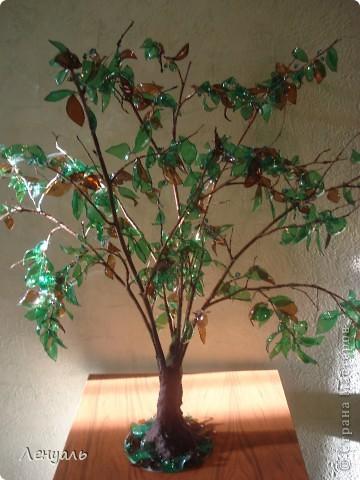 Деревья делала впервые.Саму идею увидела в интернете и захотела тоже попробовать.Вот получились у меня такие деревья. фото 3