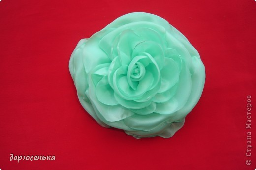 роза фото 5