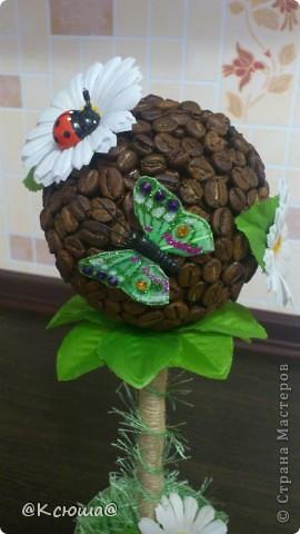 Всем привет!!!! Вот хочу поделиться с вами своим кофе - ромашковым деревцем!!! На улице солнце, жара вот и деревце получилось по летнему теплым!!!!! фото 3