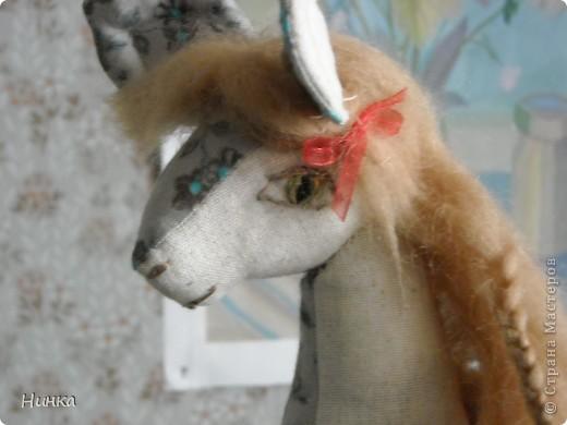 Лошадь с большими ушами фото 2