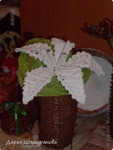 Заготовка для рождественского венка. фото 3