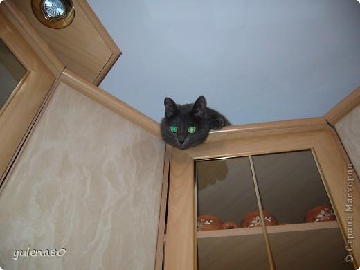 Это наш кот-верхолаз. Зовут его Максим, Макс. 25 июля мы отметили 8-летие нашего котика. фото 3