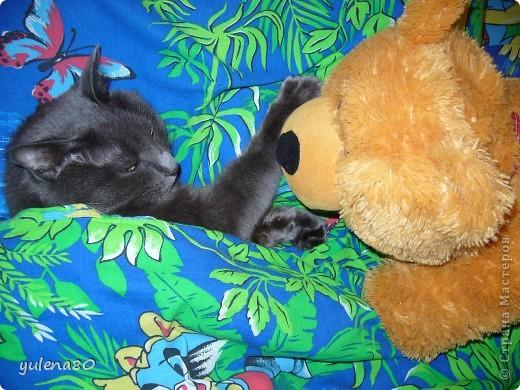 Это наш кот-верхолаз. Зовут его Максим, Макс. 25 июля мы отметили 8-летие нашего котика. фото 5