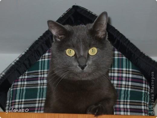 Это наш кот-верхолаз. Зовут его Максим, Макс. 25 июля мы отметили 8-летие нашего котика. фото 1
