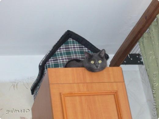 Это наш кот-верхолаз. Зовут его Максим, Макс. 25 июля мы отметили 8-летие нашего котика. фото 2