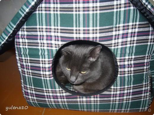 Это наш кот-верхолаз. Зовут его Максим, Макс. 25 июля мы отметили 8-летие нашего котика. фото 10