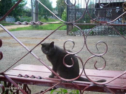 Это наш кот-верхолаз. Зовут его Максим, Макс. 25 июля мы отметили 8-летие нашего котика. фото 9