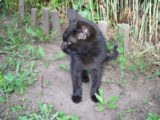 Это наш кот-верхолаз. Зовут его Максим, Макс. 25 июля мы отметили 8-летие нашего котика. фото 12