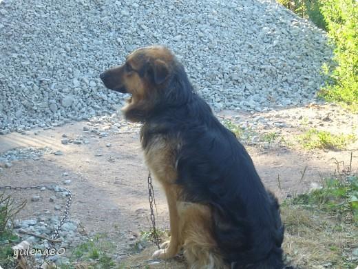 Доброго дня всем жителям СМ! Вчера я познакомила вас с нашим котом Максом http://stranamasterov.ru/node/396715 , а сегодня хочется представить вам нашего пёсика. Зовут Тайгер. Здесь он еще малыш, только появился у нас.  фото 4