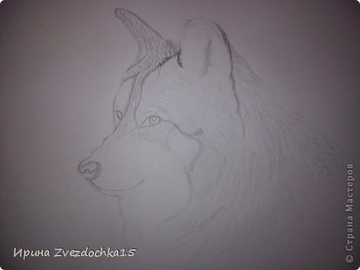 Решила не описывать, как рисовала, в интернете есть уроки, как рисовать такого волка))Но я рисовала не по урокам, просто с картинки) А4 фото 3