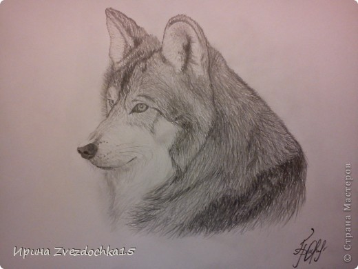 Рисование и живопись Волк