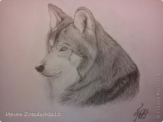 Решила не описывать, как рисовала, в интернете есть уроки, как рисовать такого волка))Но я рисовала не по урокам, просто с картинки) А4 фото 1