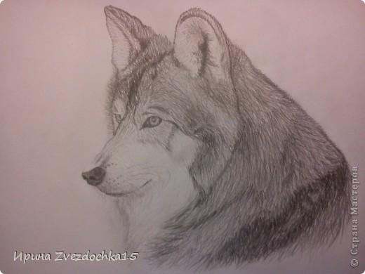 Решила не описывать, как рисовала, в интернете есть уроки, как рисовать такого волка))Но я рисовала не по урокам, просто с картинки) А4 фото 7