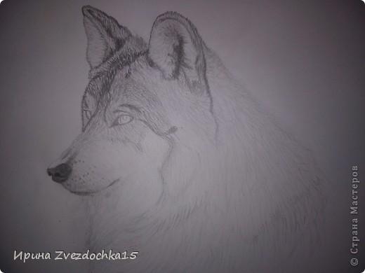 Решила не описывать, как рисовала, в интернете есть уроки, как рисовать такого волка))Но я рисовала не по урокам, просто с картинки) А4 фото 6