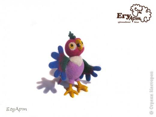 Попугай Кеша фото 5