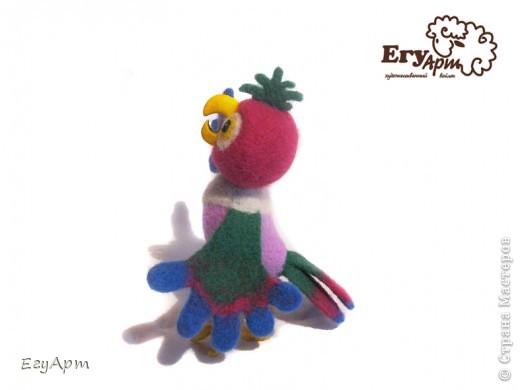 Попугай Кеша фото 4