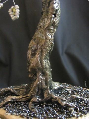 Денежное деревце фото 2